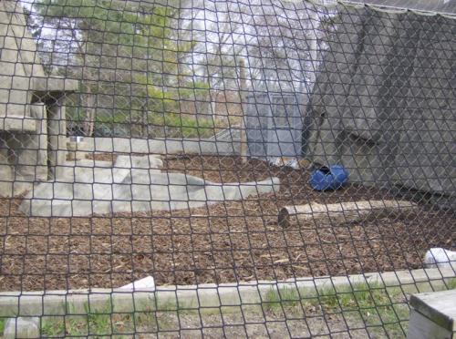 toledo zoo tiger exhibit 002