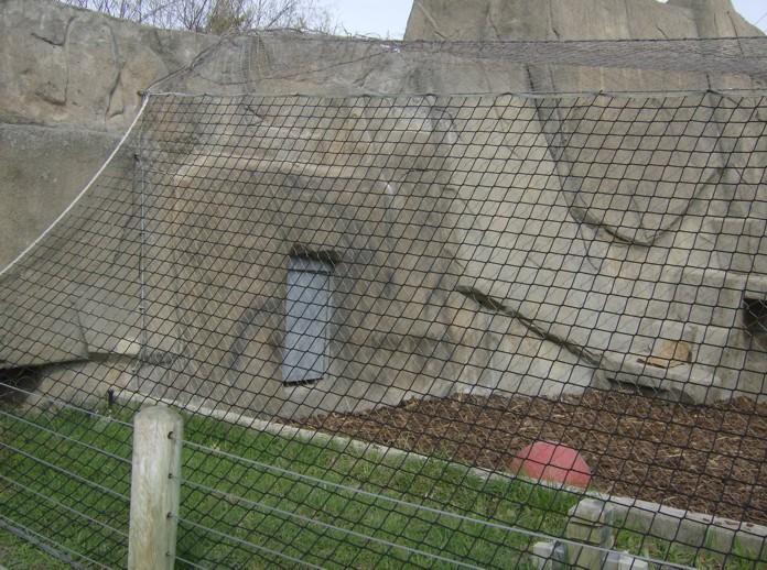 toledo zoo tiger exhibit 001